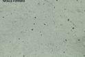 Камень LG HI-MACS M503 Ferrara