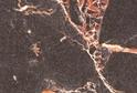 3029 Мрамор Марквина черный